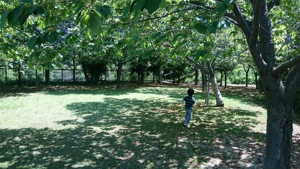 深山公園イギリス庭園
