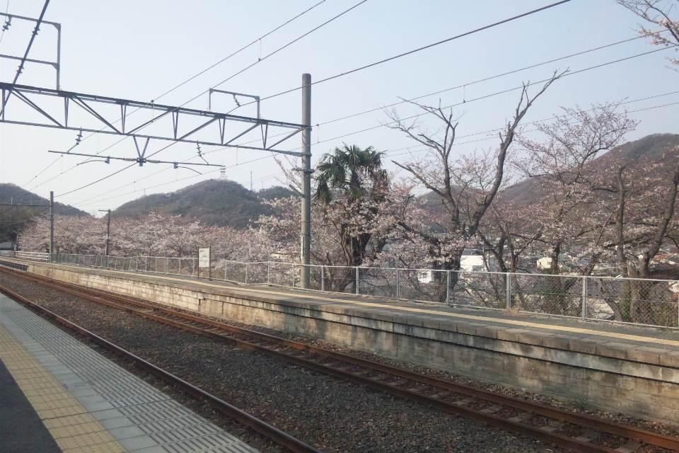 備前田井駅の桜