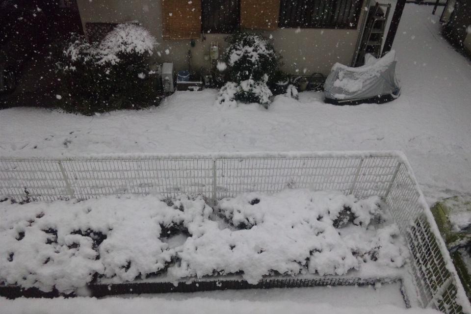 神奈川大雪警報